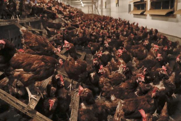 Kriminálny akt: Milióny jedovatých vajec a raňajky miliardárov